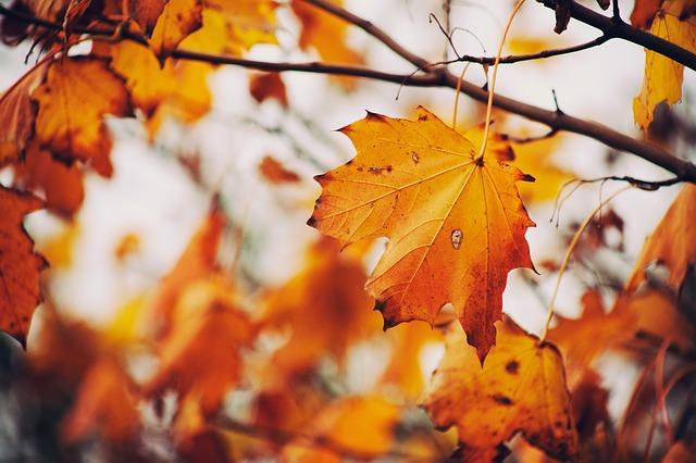 autumn-843213_640