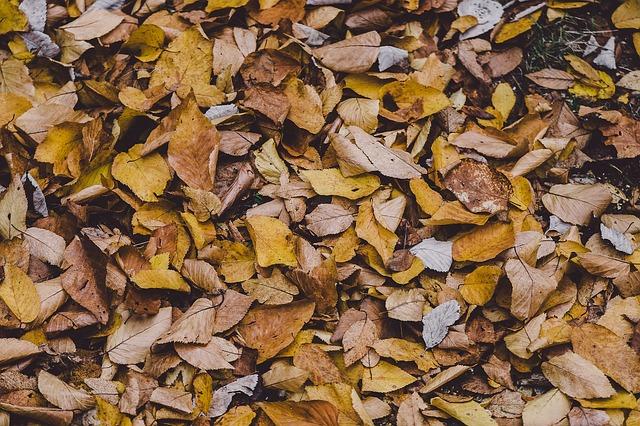 autumn-1031356_640