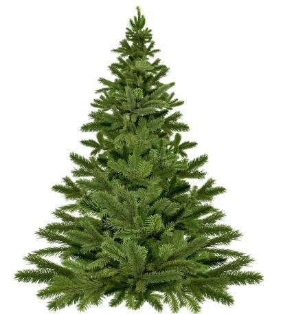 christmas-tree-1792267_640